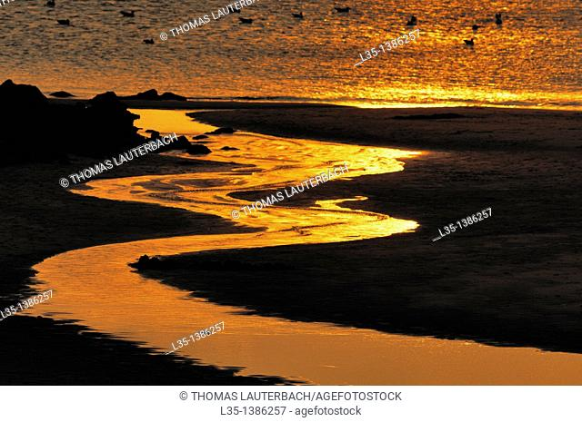 At sunset, a shining rivulet, the North Sea in the background, Sylt, Germany