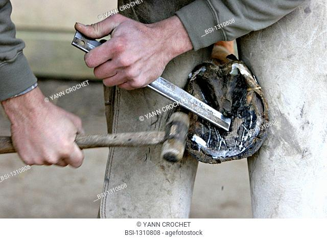 Itinerant blacksmith farrier : cleaning of the hoof so as to place a new horseshoe on a planner surface Oise, Picardy, France