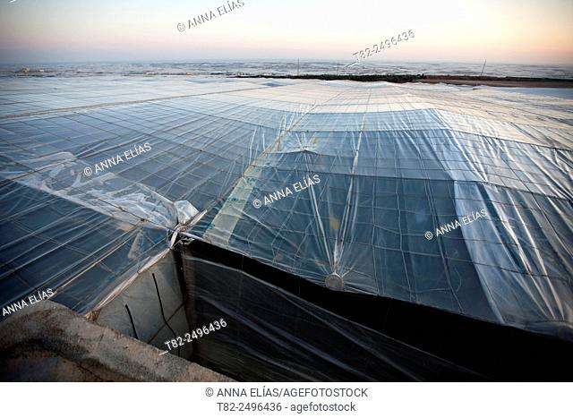 greenhouses for vegetables and fruits in El Ejido, Almeria, Andalucia, Spain