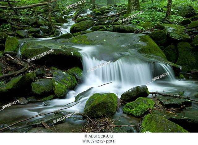 Stream, Spring Landscape, Newfound Gap Rd, Great Smoky Mountains National Park, TN