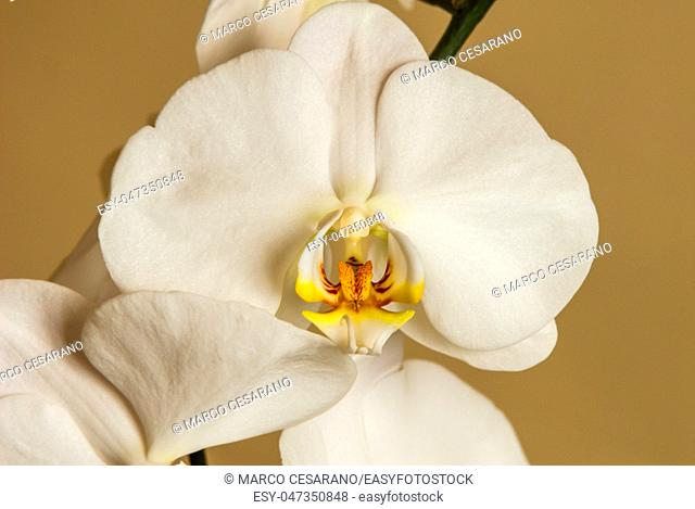 Beautiful white orchid, shot at close range, in its small details