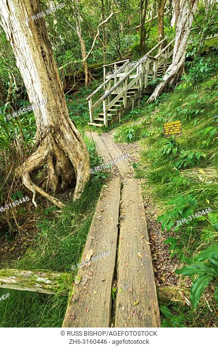 Boardwalk on the Alakai Swamp Trail, Kokee State Park, Kauai, Hawaii USA