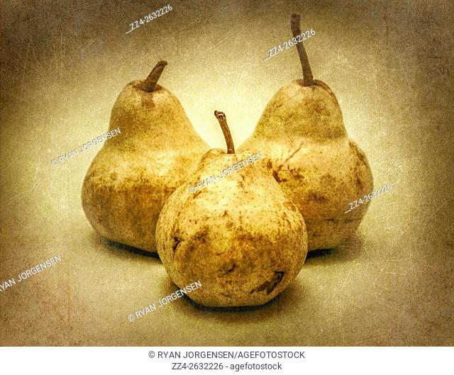 An Uneven Pair in Odds. Vintage pear still life with old style texture