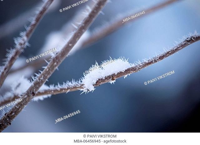 Close-up of hoarfrost on top of the branch with blue background