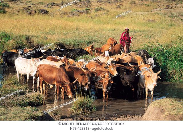 Masai people, shepherds and warriors in Kenya. Masai. Kenya
