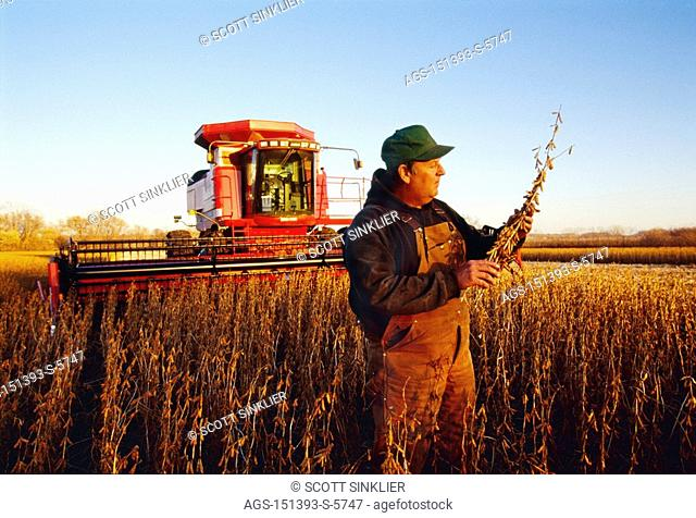 Agriculture - A farmer inspects mature, harvest ready soybean plants in the field at sunset with his combine in the background / IA