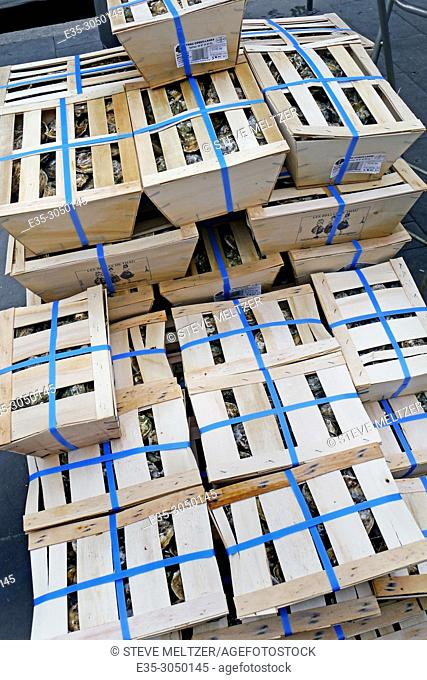 Boxes of Mediterranean oysters prepared for New Year's Eve celebrations Pézenas France
