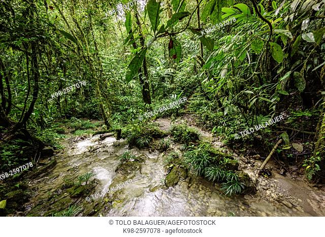 Guatemala, El Quiche, Lancetillo, Tropical forest in Cuchumatanes range near La Parroquia