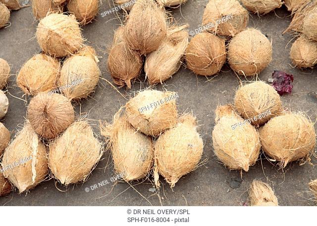 Coconuts for sale in market, Stone Town, Zanzibar, Tanzania
