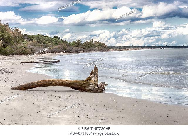 Lonely natural beach with tree trunk