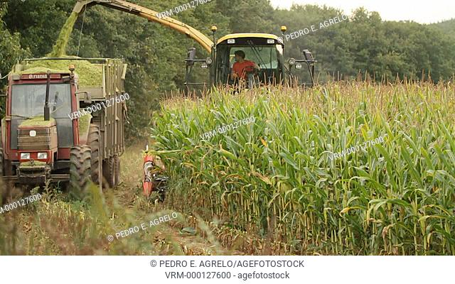 Harvesting or threshing machine, cutting and crushed cereal. In this case Corn. In the picture the combine harvester working in tandem with tractor and trailer