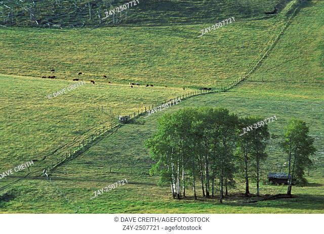 Farm land in the Okanagan Valley, near Osoyoos, British Columbia, Canada