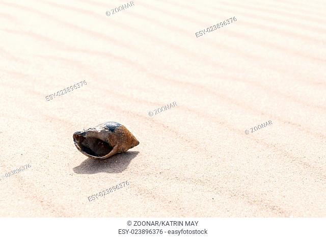 closeup of a snail shell on a beach