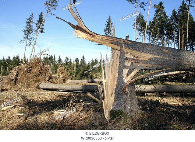Storm damage in a wood