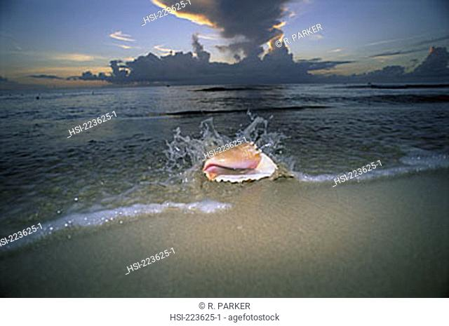 environment, nature, ocean, coast, sunset, beach, seashell, flash, sunrise, Barbados, shell, West Indies, Caribbean, tropical beach, tropical