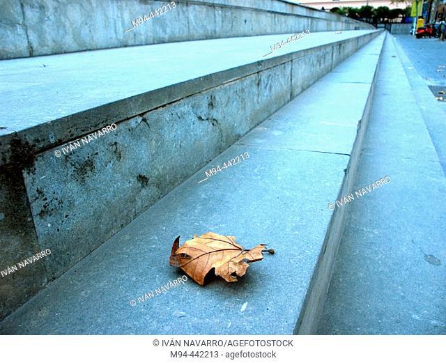 Dry leaf on stairs. IVAM. Valencia. Spain