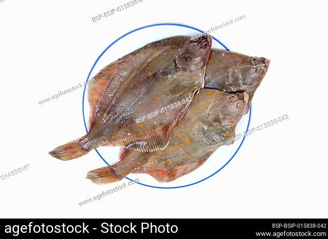Whole Plaice flatfish isolated on a white background