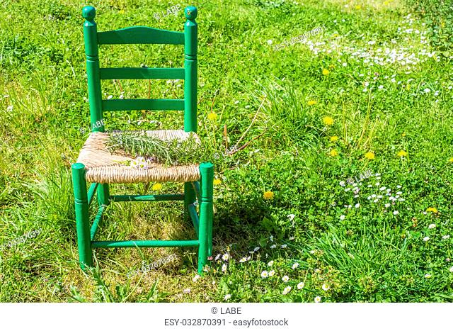 Old wooden chair with rosemary and daisies in the meadow