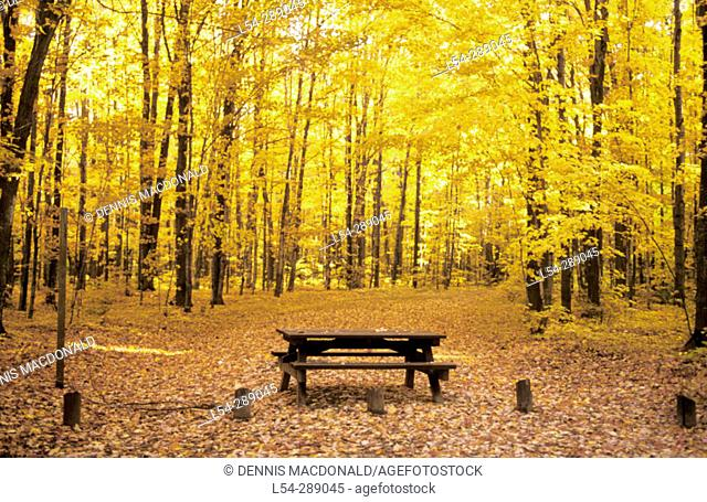 Hiawatha National Forest. Michigan. USA