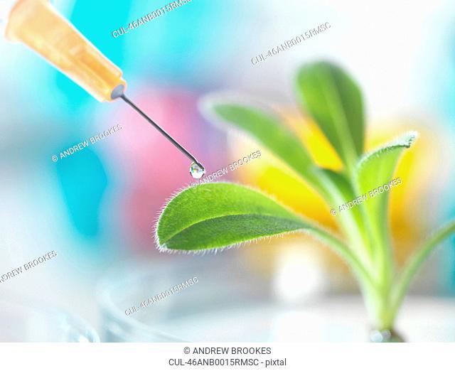 Needle dropping liquid onto plant