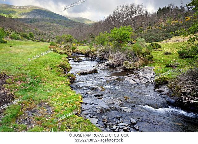 Lillas river in the Casarejo. Natural Park del Hayedo de Tejera Negra. Sierra Norte. Guadalajara. Castilla la Mancha. Spain