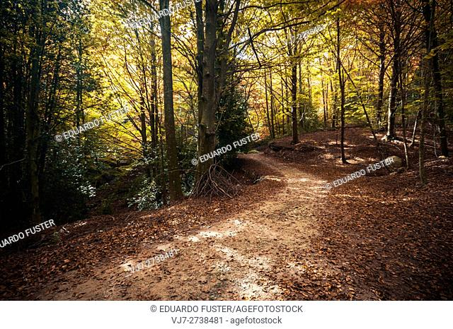 Montseny forest in autumn