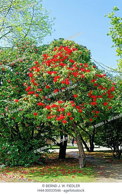 Jardim Do Palacio Do Cristal, Bäume, Blüten