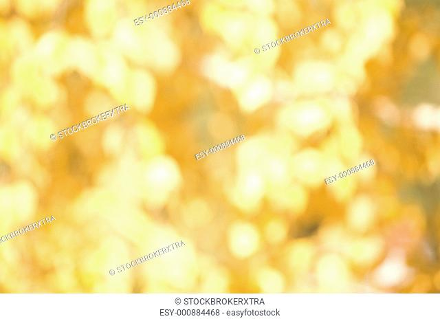 Blurred background of yellow or golden symbolizing either autumn leaves or Christmas decoration