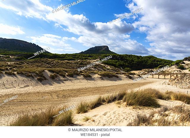 Regeneration reserve of sand dunes on the beach of Cala Mesquida Majorca Spain, the sky is cloudy