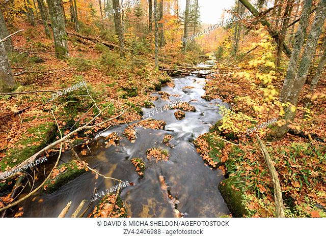 Landscape of a little River (Keine Ohe) flowing through the forest in autumn in the Bavarian forest, Bavaria, Germany