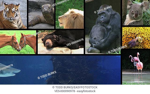 Animal montage