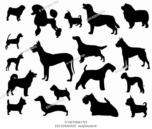 Collection of silhouettes of domestic animals - dogs of different breeds