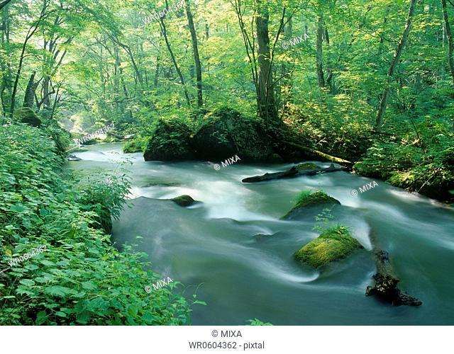 Ashura-no-nagare of Oirase Stream, Towada, Aomori, Japan