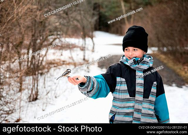 Young boy feeding a chickadee bird from his hand on a winter day