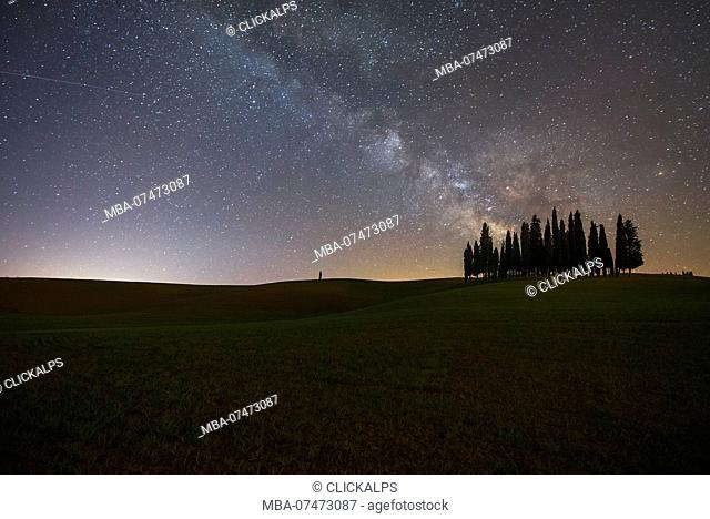 Cypress trees night view, San Quirico d' Orcia, Val d' Orcia, Siena, Tuscany, Italy