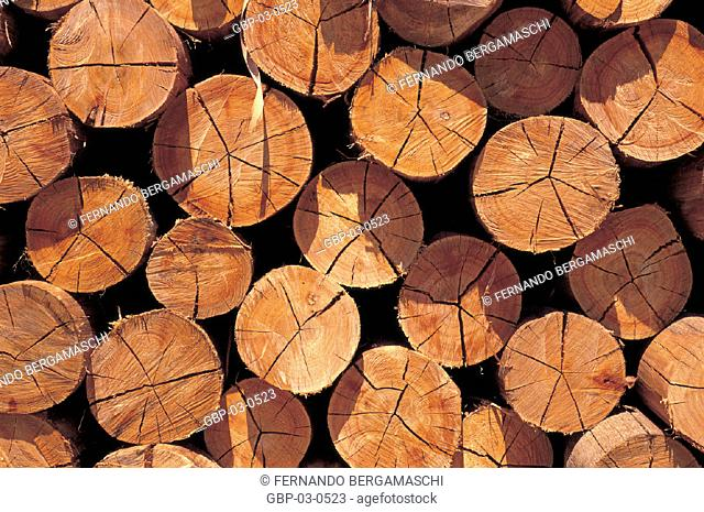 Photo illustrated cut tree trunks, stumps, cutting, exploitation, deforestation, forest, stacked