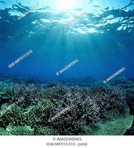 Underwater view of seaweed