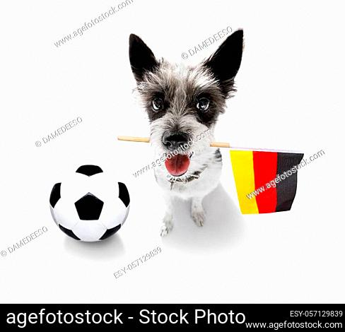 soccer football poodle dog playing with leather ball, isolated on white background and german flag