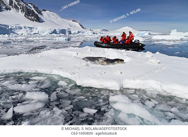 Adult leopard seal Hydrurga leptonyx with Lindblad Expedition guests in Dorian Bay near the Antarctic Peninsula, Southern Ocean