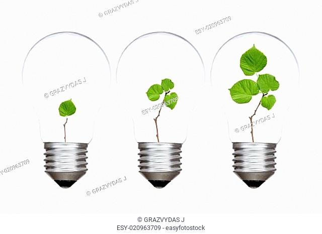 Three light bulbs with green plants inside