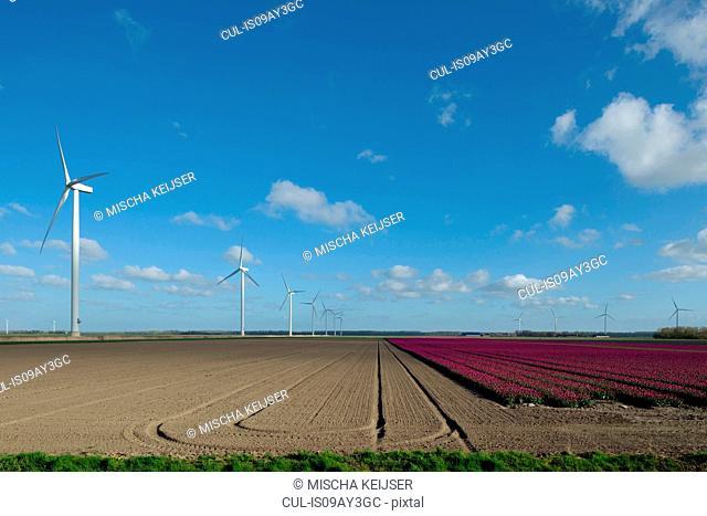 Wind turbines in field on farmland, Zeewolde, Flevoland, Netherlands