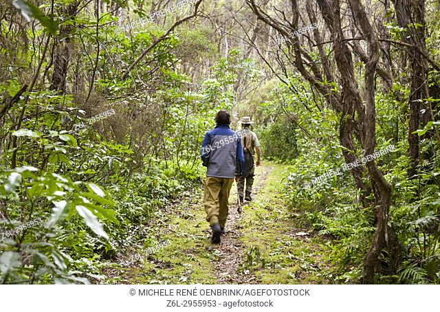 Tourists walking down trail to go fly fishing with fishing guide in Lake Taupo area stream in New Zealand