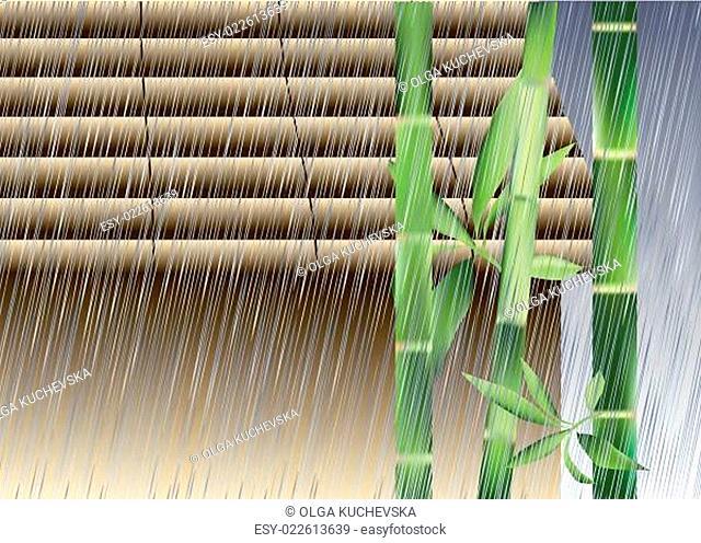 Bamboo under the rain
