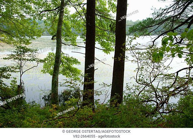 Tillinghast Pond, Tillinghast Pond Management Area, Rhode Island