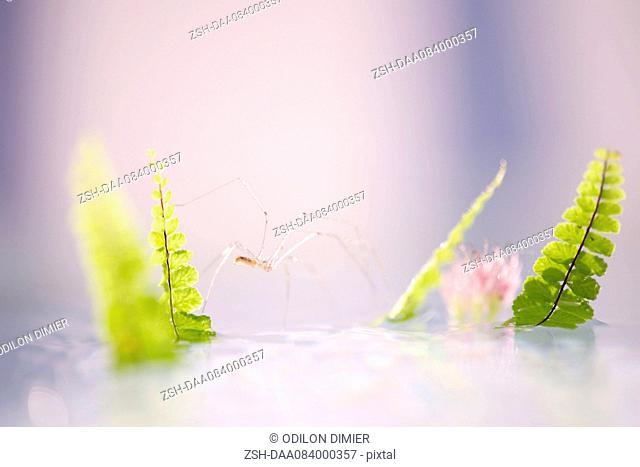 Delicate spider on water