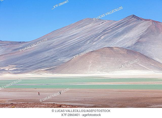 Salar (salt flats) or laguna (lagoon) de Talar, also called de Aguas Calientes, Altiplano, Puna, Atacama desert. Region de Antofagasta. Chile