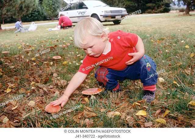 Child inspects toadstool (Amanita muscaria). Northern Southland. New Zealand