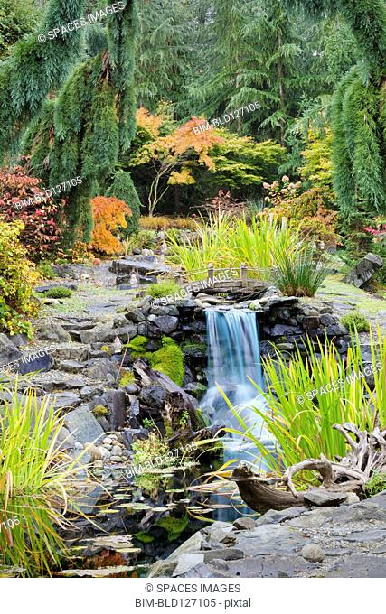 Autumn leaves on bushes around waterfall feature in landscaped garden