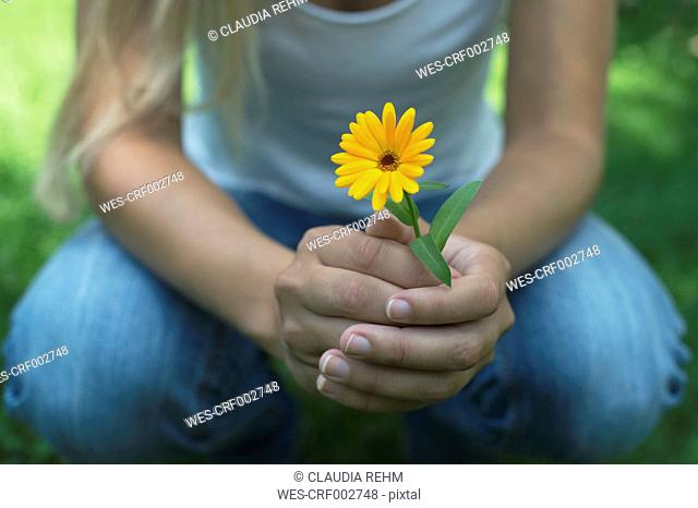 Hands of woman holding pot marigold