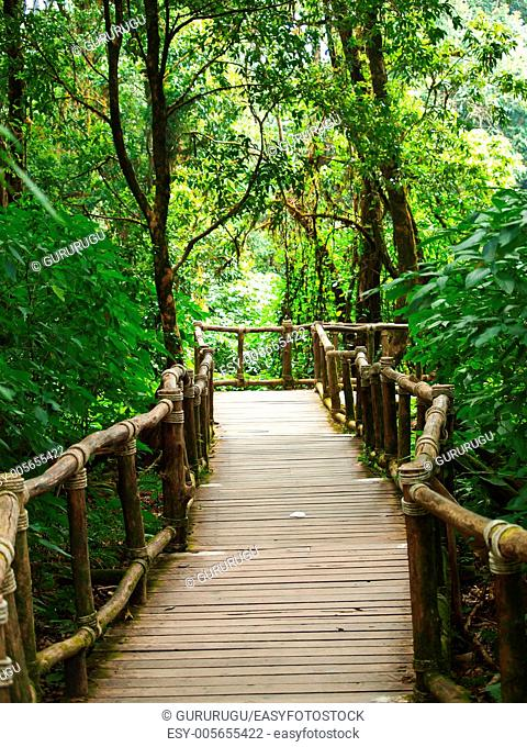 Wooden path way among the forest in Doi Inthanon in Chiang Mai, Thailand
